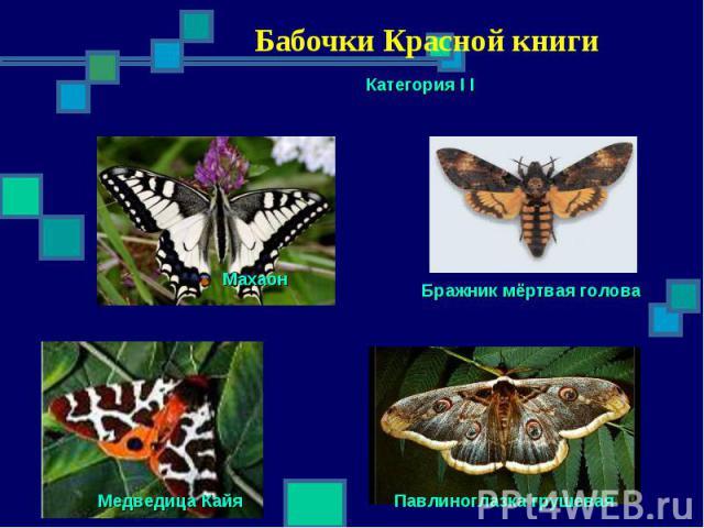 Бабочки Красной книги Категория I I Махаон Бражник мёртвая голова Павлиноглазка грушевая Медведица Кайя