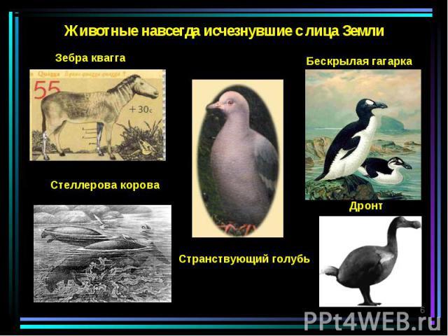 Животные навсегда исчезнувшие с лица Земли Зебра квагга Странствующий голубь Стеллерова корова Бескрылая гагарка Дронт *