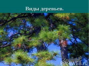 Виды деревьев.