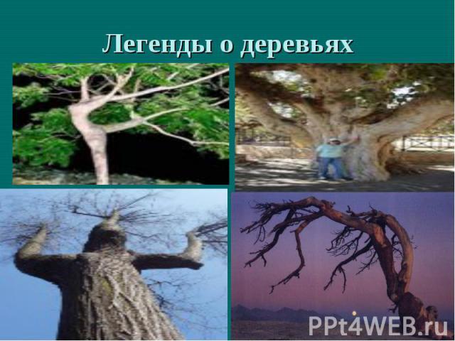 Легенды о деревьях