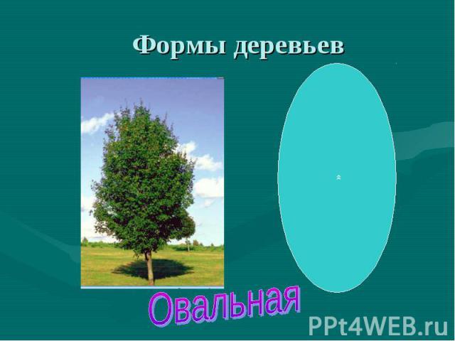Форма деревьев