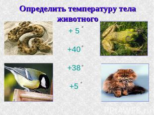 Определить температуру тела животного + 5+40+38+5