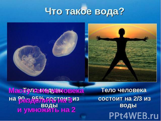 Что такое вода? Тело медузы на 90 – 95% состоит из воды Тело человека состоит на 2/3 из воды Массу тела человека разделить на 3 и умножить на 2