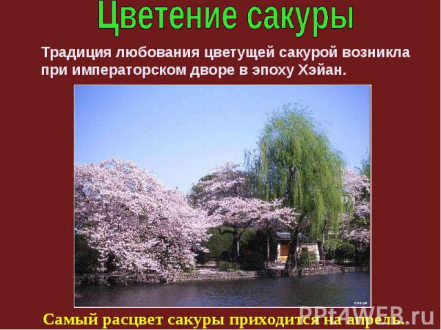 Традиция любования цветущей сакурой возникла при императорском дворе в эпоху Хэйан. Самый расцвет сакуры приходится на апрель.