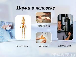 Науки о человеке анатомия медицина гигиена физиология