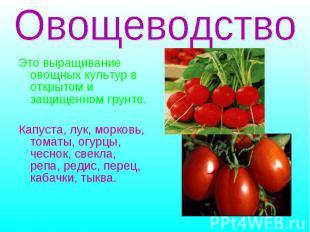 Это выращивание овощных культур в открытом и защищенном грунте. Капуста, лук, мо