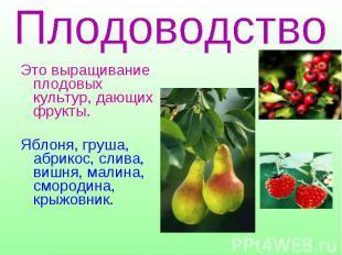 Это выращивание плодовых культур, дающих фрукты. Яблоня, груша, абрикос, слива,