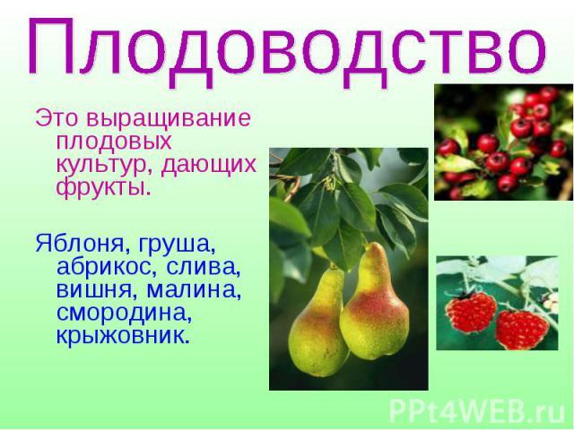 Это выращивание плодовых культур, дающих фрукты. Яблоня, груша, абрикос, слива, вишня, малина, смородина, крыжовник.