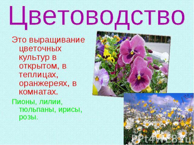Это выращивание цветочных культур в открытом, в теплицах, оранжереях, в комнатах. Пионы, лилии, тюльпаны, ирисы, розы.