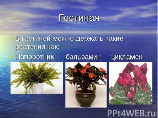 Гостиная В гостиной можно держать такие растения как: Папоротник бальзамин цикла