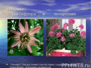 А также: Пассифлора и пеларгония Почему? Эти растения способствуют созданию уютн