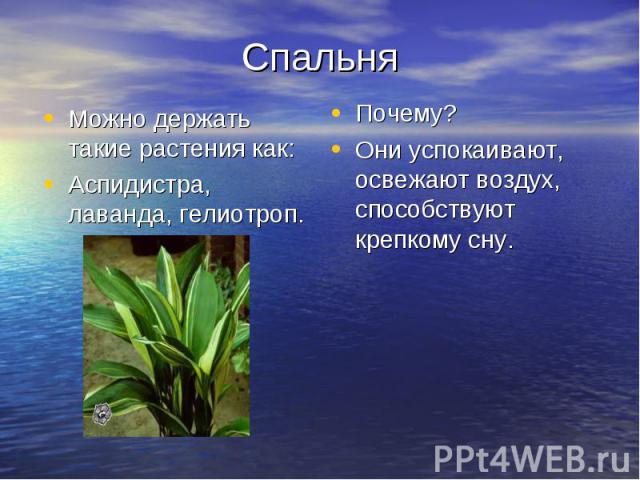 Спальня Можно держать такие растения как: Аспидистра, лаванда, гелиотроп. Почему? Они успокаивают, освежают воздух, способствуют крепкому сну.