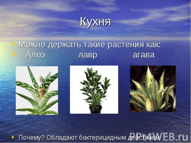 Кухня Можно держать такие растения как: Алоэ лавр агава Почему? Обладают бактерицидным действием