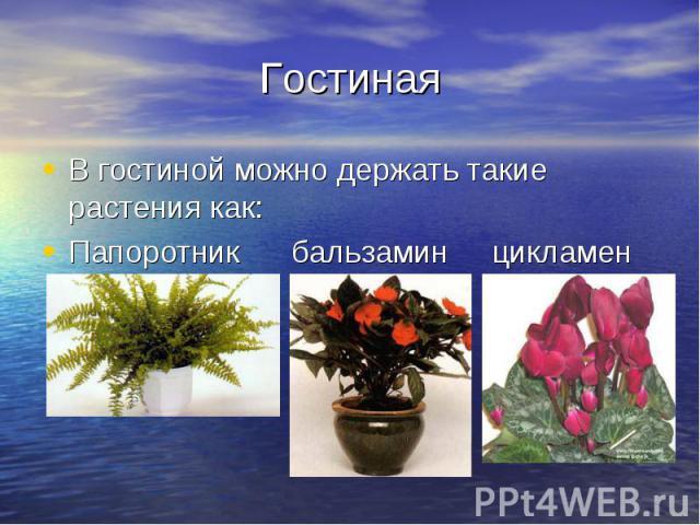 Гостиная В гостиной можно держать такие растения как: Папоротник бальзамин цикламен