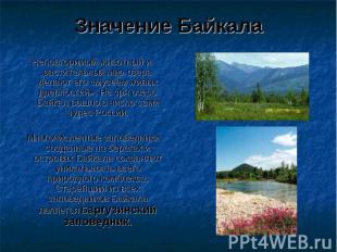 Значение Байкала Неповторимый животный и растительный мир озера делают его «музе