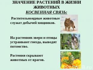 ЗНАЧЕНИЕ РАСТЕНИЙ В ЖИЗНИ ЖИВОТНЫХ КОСВЕННАЯ СВЯЗЬ: Растительноядные животные сл