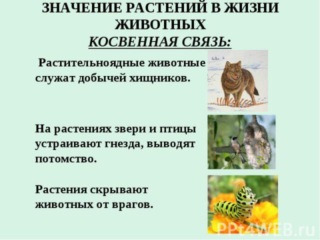 ЗНАЧЕНИЕ РАСТЕНИЙ В ЖИЗНИ ЖИВОТНЫХ КОСВЕННАЯ СВЯЗЬ: Растительноядные животные служат добычей хищников. На растениях звери и птицы устраивают гнезда, выводят потомство. Растения скрывают животных от врагов.