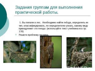 Задания группам для выполнения практической работы. 1. Вы попали в лес. Необходи