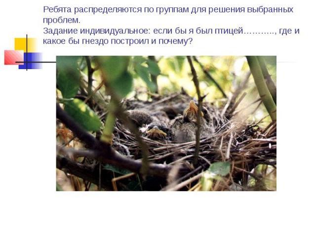 Ребята распределяются по группам для решения выбранных проблем. Задание индивидуальное: если бы я был птицей……….., где и какое бы гнездо построил и почему?
