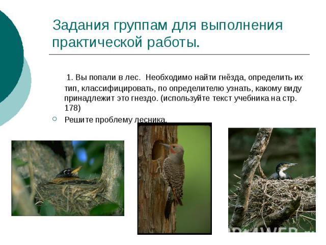 Задания группам для выполнения практической работы. 1. Вы попали в лес. Необходимо найти гнёзда, определить их тип, классифицировать, по определителю узнать, какому виду принадлежит это гнездо. (используйте текст учебника на стр. 178) Решите проблем…