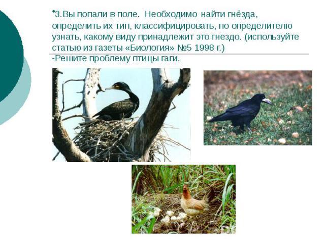 3.Вы попали в поле. Необходимо найти гнёзда, определить их тип, классифицировать, по определителю узнать, какому виду принадлежит это гнездо. (используйте статью из газеты «Биология» №5 1998 г.) -Решите проблему птицы гаги.