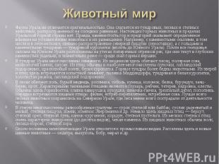 Фауна Урала не отличается оригинальностью. Она слагается из тундровых, лесных и