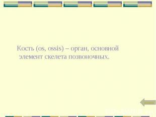 Кость (os, ossis) – орган, основной элемент скелета позвоночных.