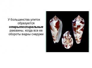 У большинства улиток образуются открытоспиральные раковины, когда все ее обороты