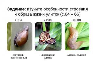 Задание: изучите особенности строения и образа жизни улиток (с.64 – 66) 1 РЯД 2