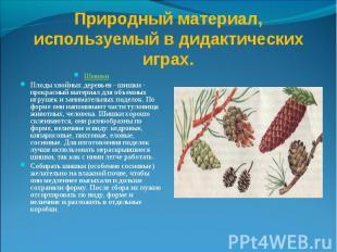 Природный материал, используемый в дидактических играх. Шишки Плоды хвойных дере