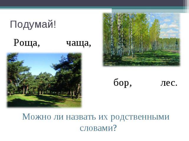 Подумай! Роща, чаща, бор, лес. Можно ли назвать их родственными словами?