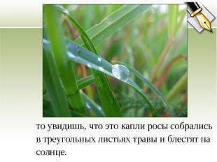 то увидишь, что это капли росы собрались в треугольных листьях травы и блестят н
