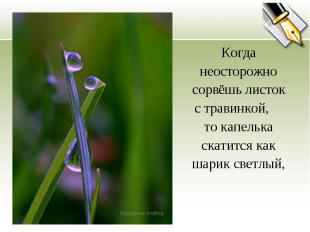 Когда неосторожно сорвёшь листок с травинкой, то капелька скатится как шарик све