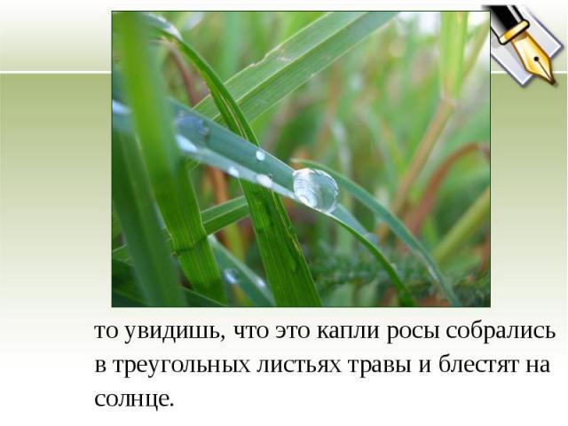 то увидишь, что это капли росы собрались в треугольных листьях травы и блестят на солнце.