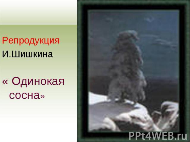 Репродукция И.Шишкина « Одинокая сосна»