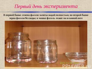 Первый день эксперимента В первой банке семена фасоли залиты водой полностью; во