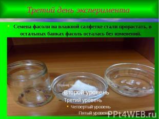 Третий день эксперимента Семена фасоли на влажной салфетке стали прорастать, в о
