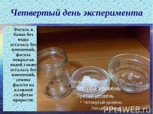 Четвертый день эксперимента Фасоль в банке без воды осталась без изменений, фасо