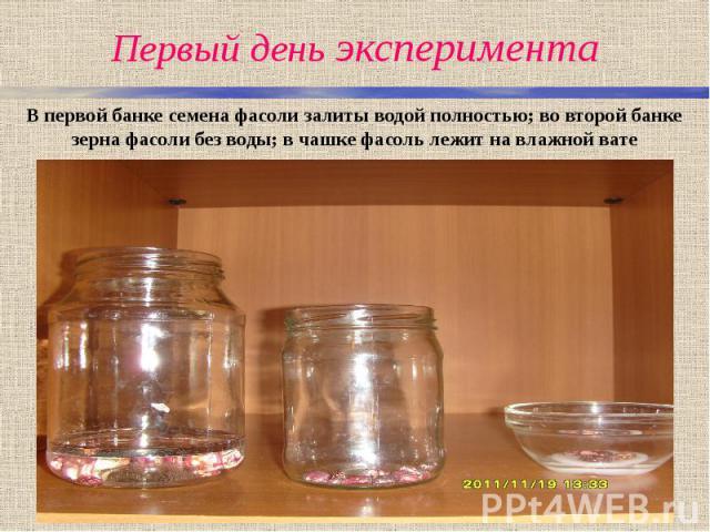 Первый день эксперимента В первой банке семена фасоли залиты водой полностью; во второй банке зерна фасоли без воды; в чашке фасоль лежит на влажной вате