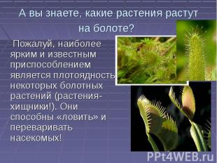 А вы знаете, какие растения растут на болоте? Пожалуй, наиболее ярким и известны