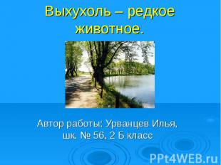 Выхухоль – редкое животное.Автор работы: Урванцев Илья, шк. № 56, 2 Б класс