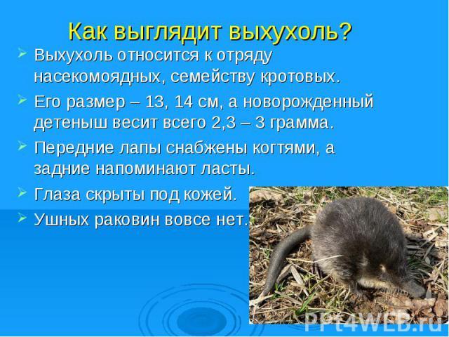 Как выглядит выхухоль?Выхухоль относится к отряду насекомоядных, семейству кротовых.Его размер – 13, 14 см, а новорожденный детеныш весит всего 2,3 – 3 грамма.Передние лапы снабжены когтями, а задние напоминают ласты.Глаза скрыты под кожей.Ушных рак…