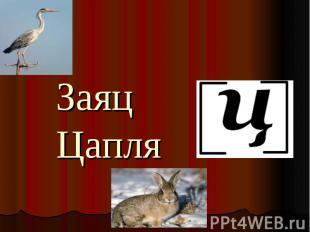 Заяц Цапля