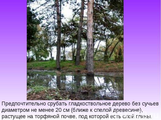 Предпочтительно срубать гладкоствольное дерево без сучьев диаметром не менее 20 см (ближе к спелой древесине), растущее на торфяной почве, под которой есть слой глины.