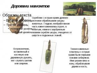Дорогами мамонтов Скреблом с острым краем древние охотники обрабатывали шкуры жи
