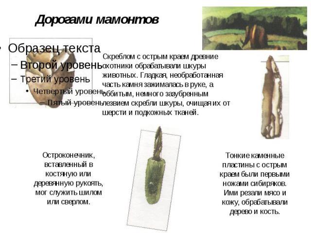 Дорогами мамонтов Скреблом с острым краем древние охотники обрабатывали шкуры животных. Гладкая, необработанная часть камня зажималась в руке, а оббитым, немного зазубренным лезвием скребли шкуры, очищая их от шерсти и подкожных тканей. Остроконечни…