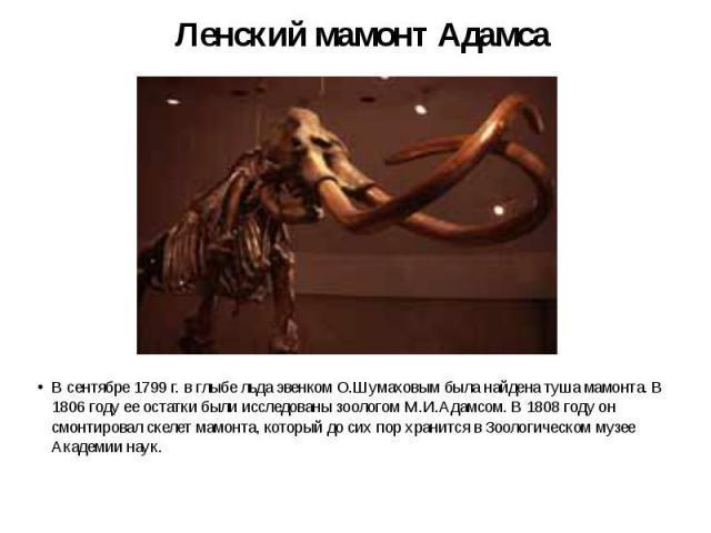 Ленский мамонт Адамса В сентябре 1799 г. в глыбе льда эвенком О.Шумаховым была найдена туша мамонта. В 1806 году ее остатки были исследованы зоологом М.И.Адамсом. В 1808 году он смонтировал скелет мамонта, который до сих пор хранится в Зоологическом…