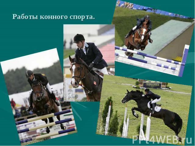 Работы конного спорта.