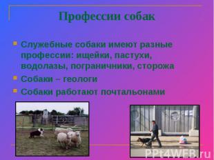 Профессии собак Служебные собаки имеют разные профессии: ищейки, пастухи, водола