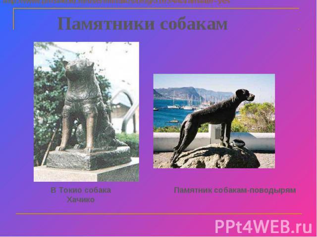 Памятники собакам В Токио собака Хачико Памятник собакам-поводырям http://www.proshkolu.ru/user/mihailos/blog/51634/&translate=yes